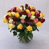 Букет из 51 разноцветной розы 40 см. фото