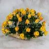 51 желтая роза 40 см. в корзине фото