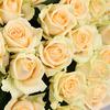 Кремовая роза 60 см. ПМ фото