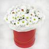 15 белых кустовых хризантем в красной шляпной коробке фото