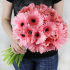 Букет из розовых гербер фото