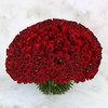 301 красная роза фото