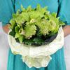 Букет из хризантем, орхидей и листьев хедеры фото
