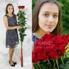 Фото #1: Букет из 5 красных длинных роз
